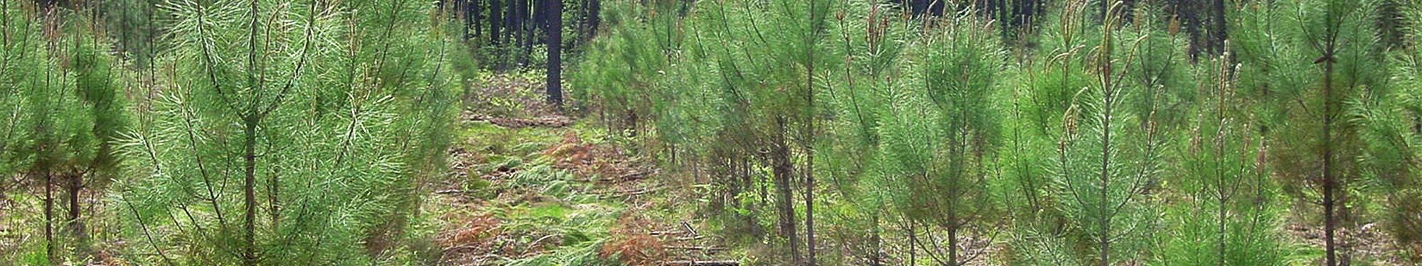 Alliance For u00eats Bois Dépressage # Fiscalité Bois Et Forêts