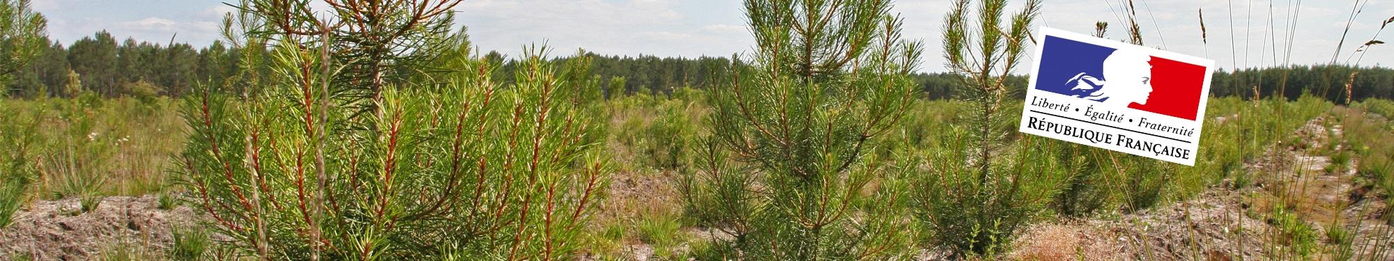 Alliance For u00eats Bois Aidesà l'investissement forestier # Fiscalité Bois Et Forêts