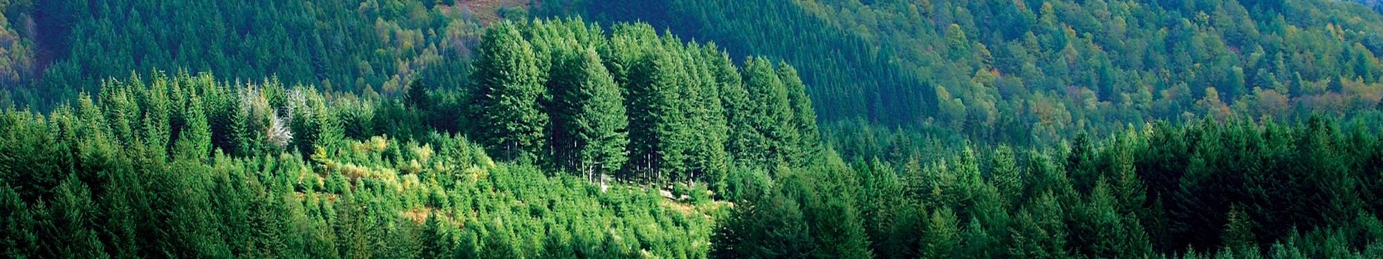 Alliance For u00eats Bois Douglas # Fiscalité Bois Et Forêts