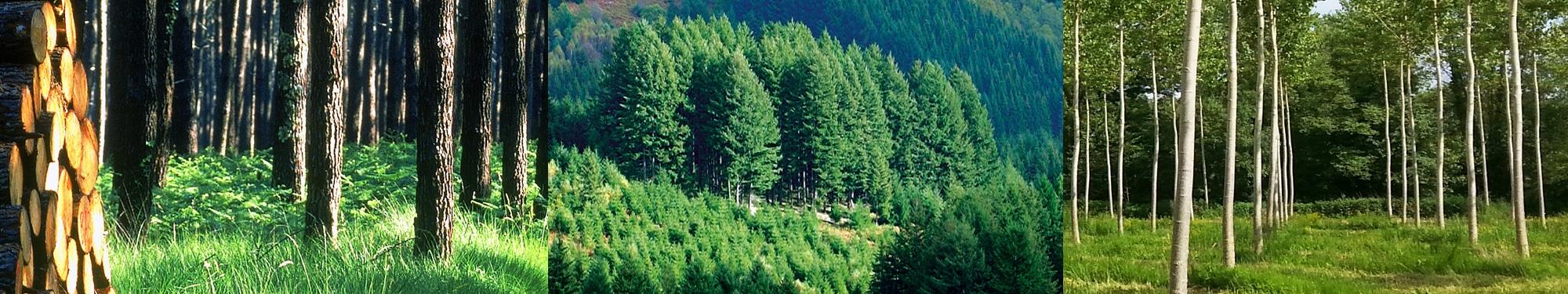 Alliance For u00eats Bois Nos essences # Fiscalité Bois Et Forêts