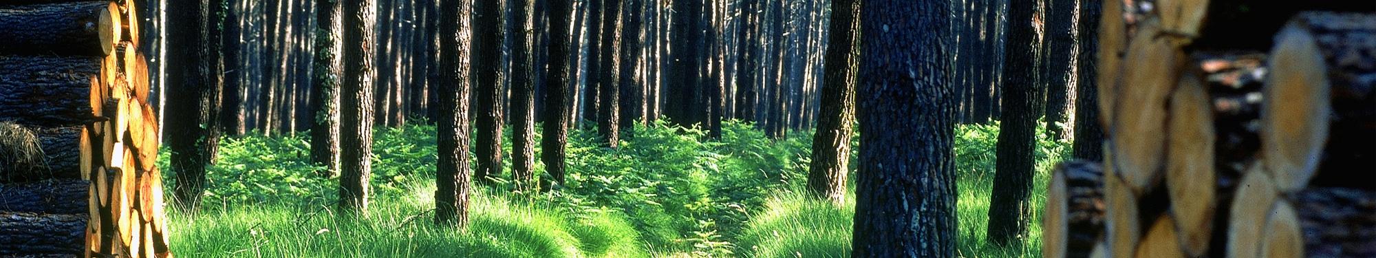 Alliance For u00eats Bois Pin maritime # Fiscalité Bois Et Forêts
