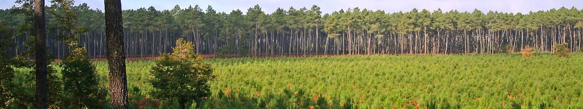 Alliance For u00eats Bois Contrat d'assurance spécifique # Fiscalité Bois Et Forêts